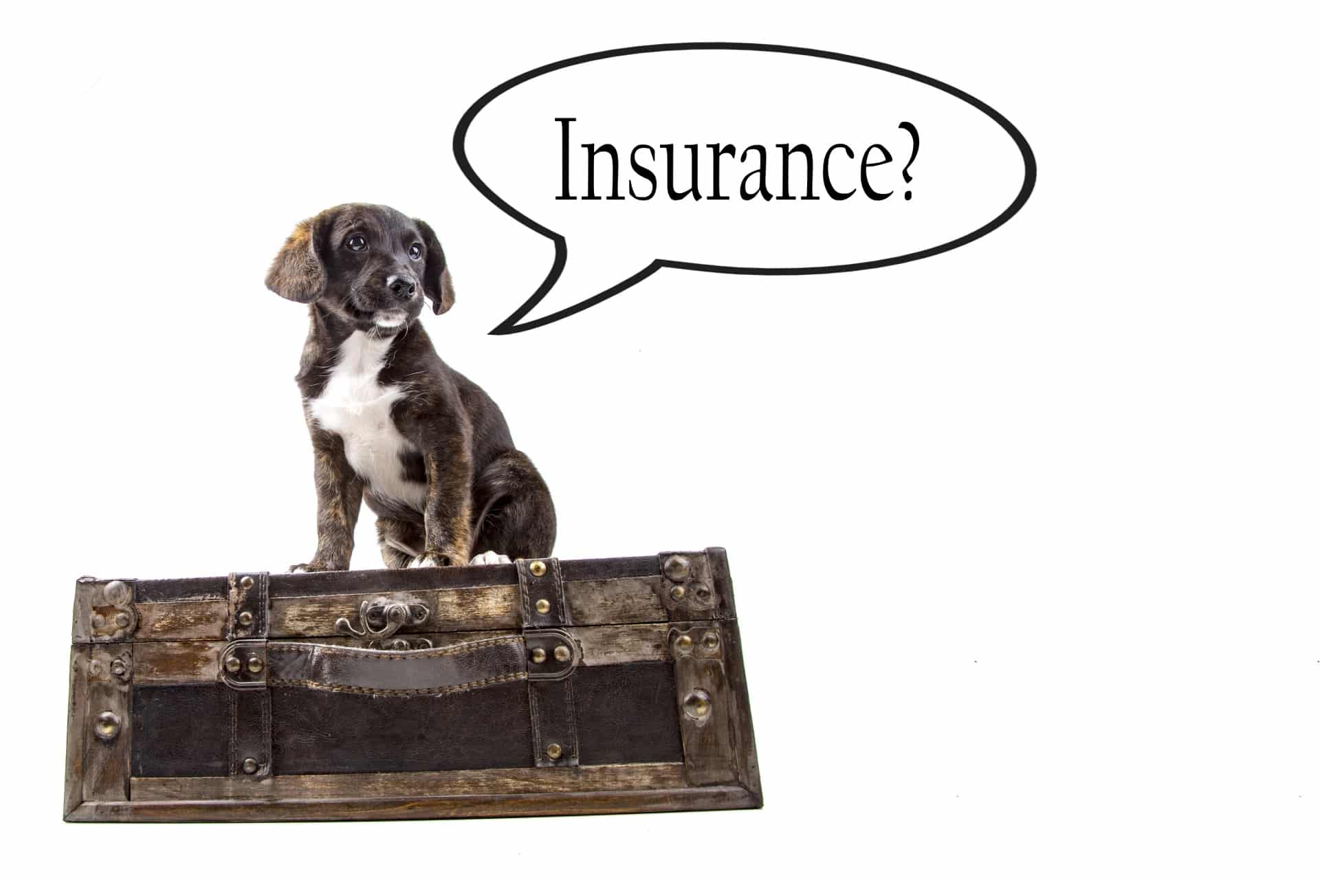 Pet Insurance Quotes - Fast Issue | SimplyInsurance.co